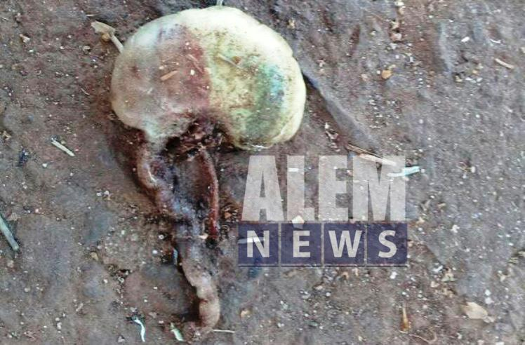 Encontraron una bolsa con un feto en Bonpland