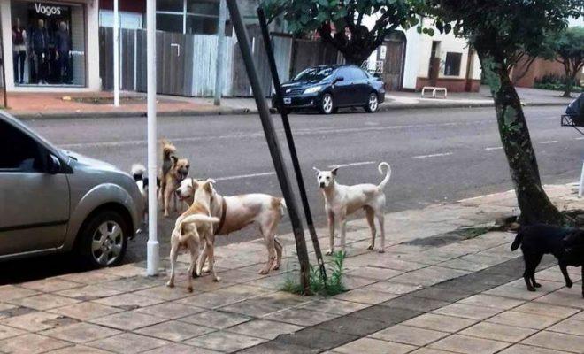 Gran aumento de accidentes por animales sueltos