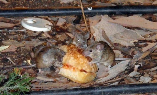 Vecinos del Ciumpalo denuncian basurales, ratas y falta de agua