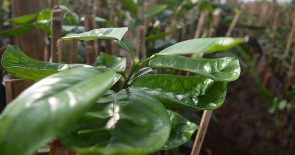 Plantines de CCAM con excelencia Internacional