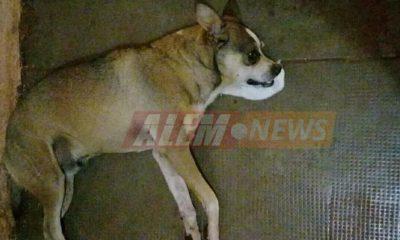 #Alerta: Denuncian envenenamiento de perros y gatos en el Barrio Illia