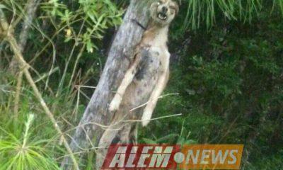 #Horror empalaron y ahorcaron a un perro en San Martín